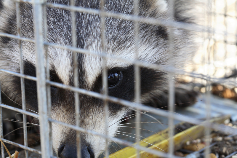 Animal Removal Leads Palm Beach animal removal service palm beach lead generation pay per call leads
