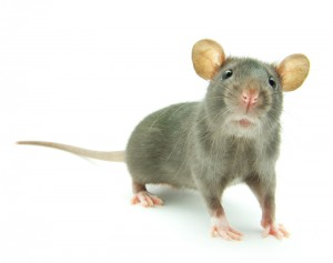 Animal Removal Leads Austin animal removal service palm beach lead generation pay per call leads